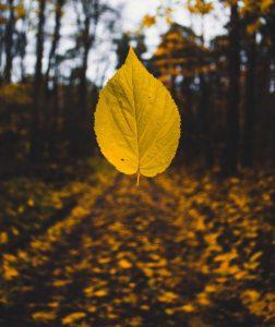 leaf story prompt